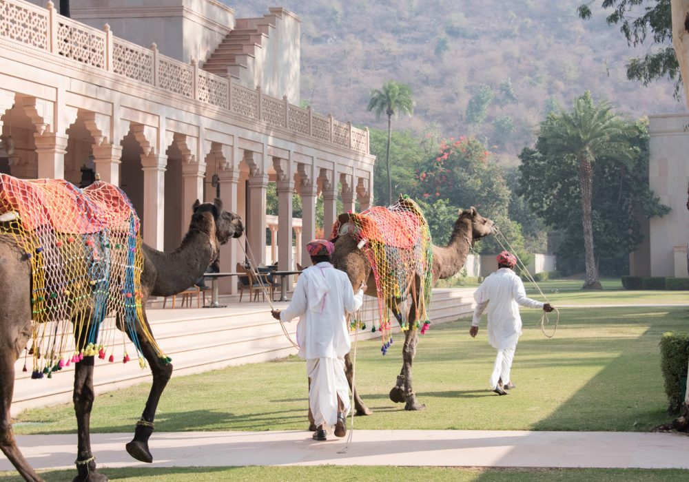 Camel ride, Amanbagh, Jaipur, Rajasthan | Bare Escape