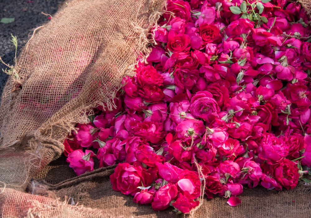 Rose petals at a local market in Jaipur