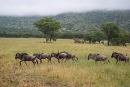 Best Safari in Tanzania by Bare Escape